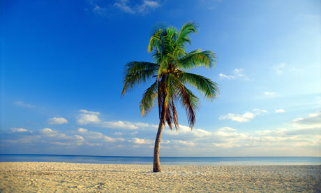 palm-tree-beach-006