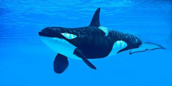 4_orca