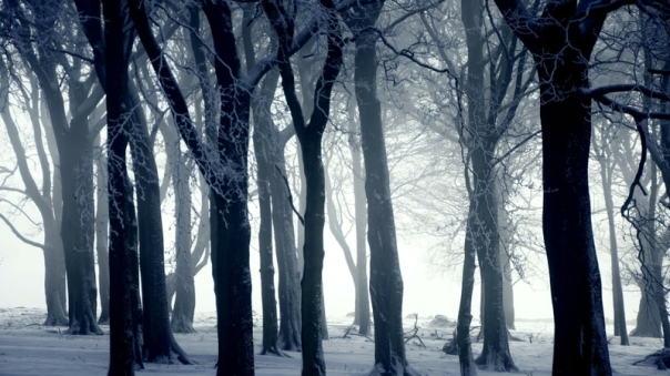 snow forest winter landscapes 1920x1080 wallpaper_www.wallmay.net_55