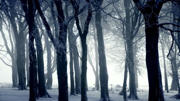 snow forest winter landscapes 1920x1080 wallpaper_www.wallmay.net_55