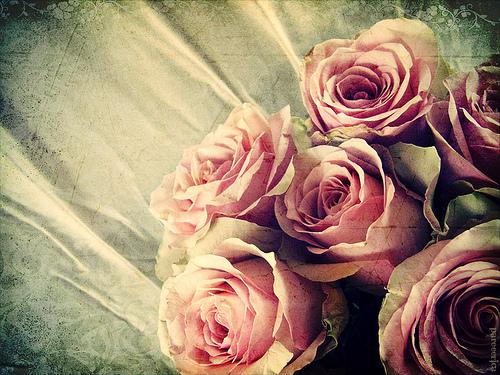 026-LOVEINSHALLAH-anthology-RosesimageParée