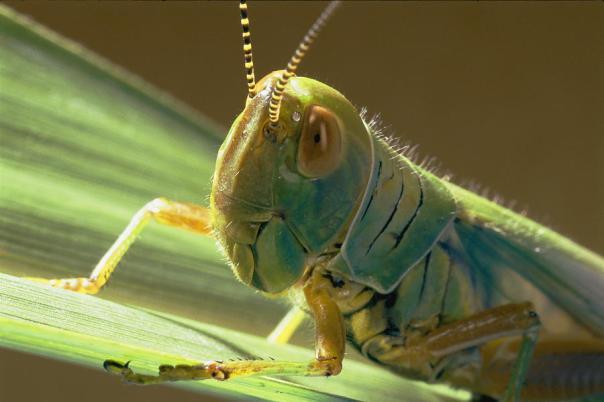 grasshopper-8