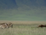 Documentary: Africa The Serengeti (Video)