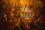 autumn-photography-2-15__880