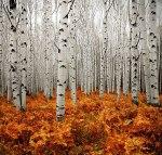 autumn-photography-2-18__880