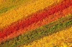autumn-photography-2-19__880