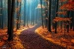 autumn-photography-2-21__880