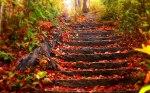 autumn-photography-2-28__880