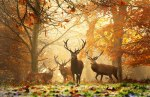 autumn-photography-2-29__880