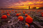 autumn-photography-2-9__880