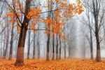 autumn-photography-31__880