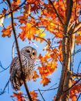 autumn-photography-nature-24__880