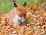 autumn-photography-nature-25__880