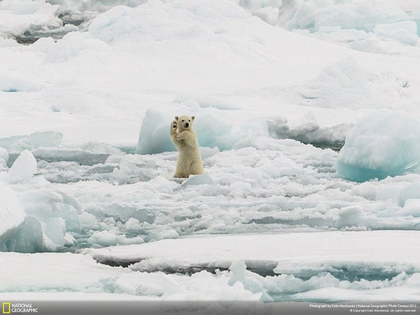 national-geographic-photo-contest-2014-photography-15