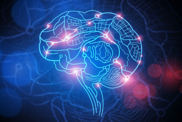 human-brain2